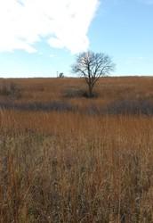 Living Life on the Prairie