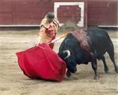 Durante una pelea con el toro.