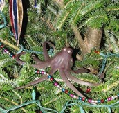 https://www.google.com/search?q=picture+of+octopus+tree&safe=strict&espv=2&biw=1920&bih=955&source=lnms&tbm=isch&sa=X&ved=0CAYQ_AUoAWoV