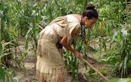 A Pilgrim working in the corn field