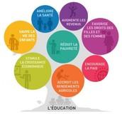 L'arbre de l'éducation