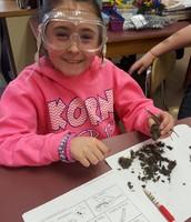 Owl pellet dissection at Korn