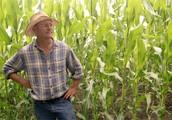Drawbacks of GMOs to Framers