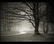 My Dream Walk