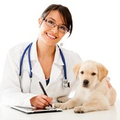 Salary To Be A Veterinarian