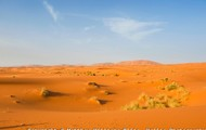 Life in the Sahara