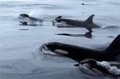 Where do whales live?