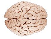 What is the Brain Hemisphere?