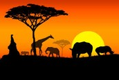 Can't decide where to go in Africa?