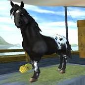 Pony Gallery