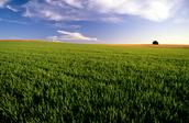 This is Iowas farming land
