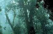 What is the climate like in a tropical rain forest?