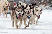 What is there to dog sledding?