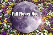 Full Flower Moon Hike, Saturday, May 2, 7pm