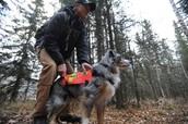 Wilderness Rescue Dog
