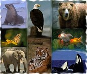 zoological works