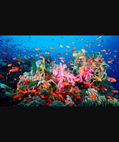 How Humans are Impacting the Coral Reef