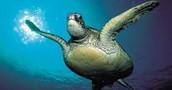 Threats & Human Impacts to Sea Turtles