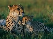 The Cheetah Princess