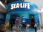 sea life aquarium field trip chaperons wanted!!