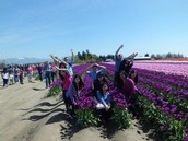 Do you want to see thousands of tulips?