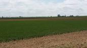 Owning Land !