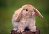 A Bunny Named Frog- Limerick