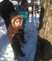 Families Cook on the Farm: Maple!