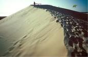 Hills at Jockey's Ridge