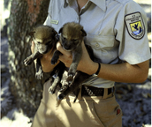 Pups in the hands of someone