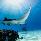 DIve Day Trips