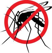 Proteccion 100% Natural contra los mosquitos!