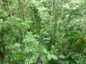 daintree rainforest (in the forest)
