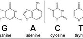 The Purines and The Pyrimidines