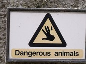 Watch Out For Different Animals!!!!!