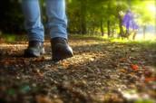 Individuele wandelcoaching: effectief en resultaatgericht!