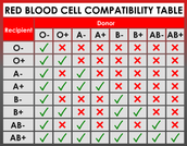 Blood Types and their Combatibility