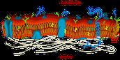 Plasma or Cell Membrane