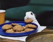 Un conejo eso está comiendo galletas.