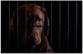 Suffering Animals