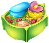 Budowa komórki roslinnej