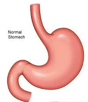 This is a stomach