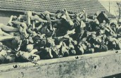 Dead bodies of Jews.