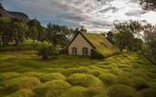 Icelandic bog house