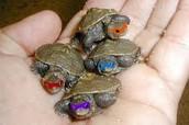 Baby Mutant Nnija Turtles!