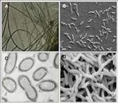 partes de bacterias