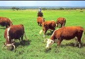 U.S Cattle Ranching
