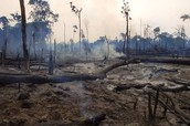 Paragraph 1 - Environmental Concerns / Paragraph 2 - Mexico 5 Fun Facts