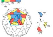 Icosahedral virus