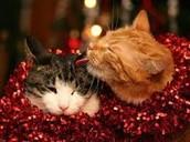 Have a happy, happy Holiday!